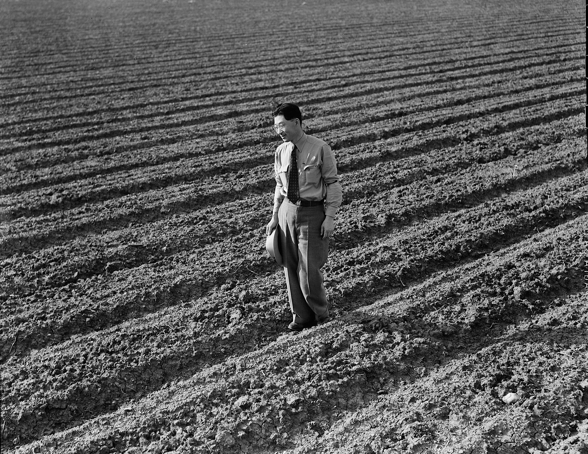 Henry Mitarai, 36, in one of his sugar-beet fields on his mechanized farm in Mountain View, Calif., in 1942, before he was relocated.